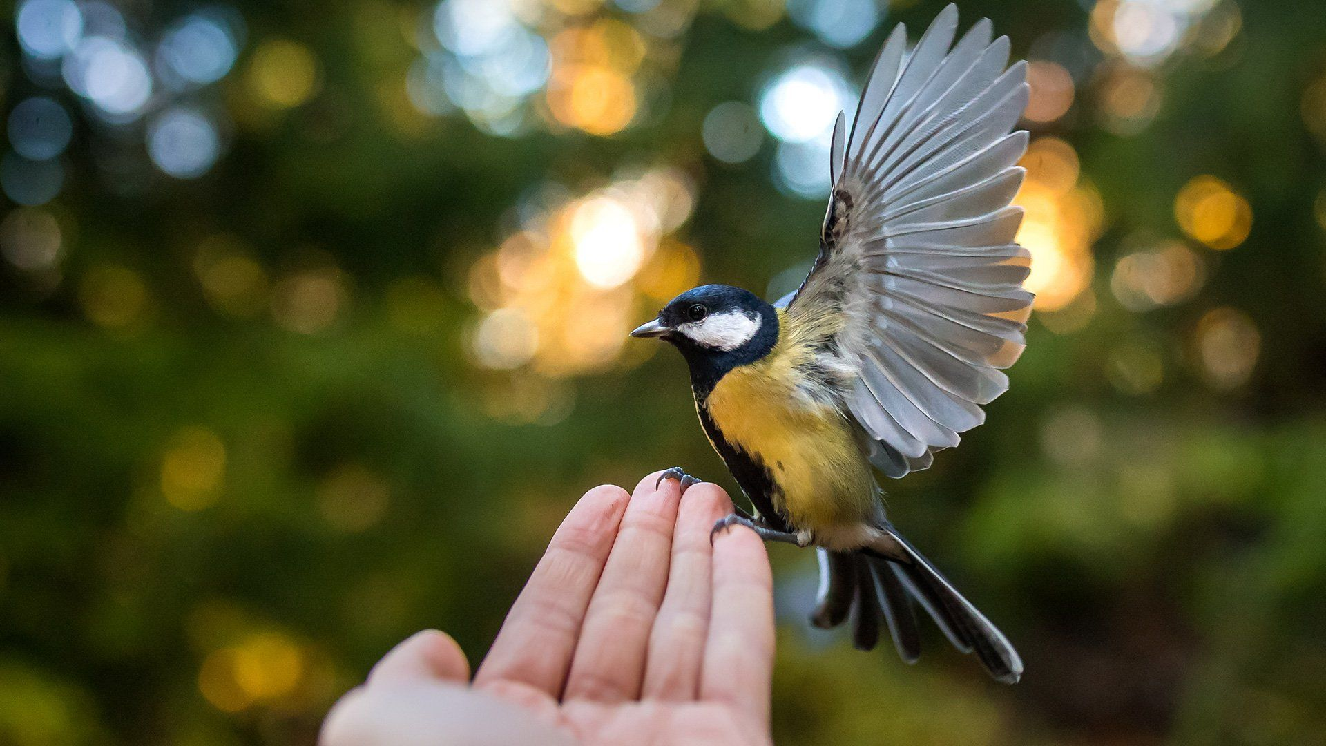 A small yellow bird perches on a hand in front of us, its wings outstretched.